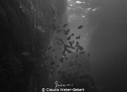 serenity......... ambient light by Claudia Weber-Gebert