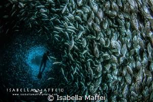 """"""" GOLD FARM """" by Isabella Maffei"""