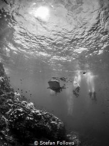 That moment when ... ! Whale Shark - Rhincodon typus. Sai... by Stefan Follows