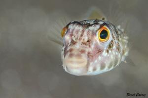 Tiny swimmer by Raoul Caprez