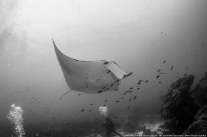 Mantaray at cleaning station by Raffaele Livornese