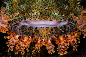 Scorpionfish detail by Paul Colley