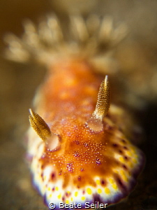 The golden nudi by Beate Seiler
