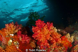 Soft corals of Misool by Todd Moseley