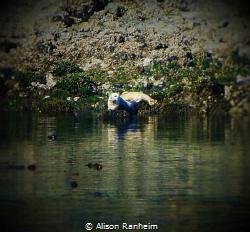 Puget Sound, WA by Alison Ranheim
