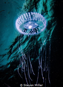 Space Jelly by Steven Miller