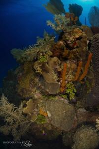 Underwater Landscape by Ledean Paden