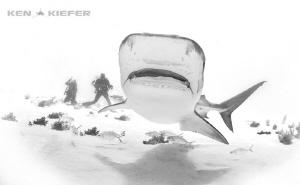 Photographers enjoy TigerShark by Ken Kiefer
