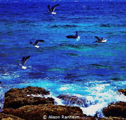 Sharks and Gulls! by Alison Ranheim