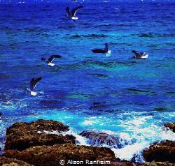 Sharks and Gulls! by Alison Ranheim