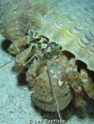 Night dive Hermit Crab/ I can see you by Les Baptiste