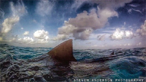 Find up for sharks! Good morning Tiger Beach! by Steven Anderson