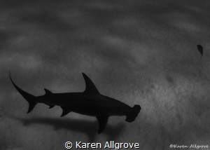 Silhouette by Karen Allgrove