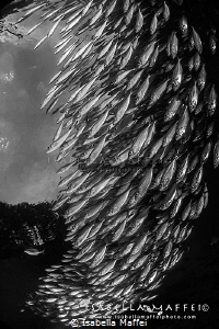 THE FALL by Isabella Maffei