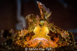 Scorpionfish by Kelvin H.y. Tan