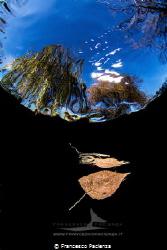 [:b:]Autumn under freshwater[:/B] by Francesco Pacienza
