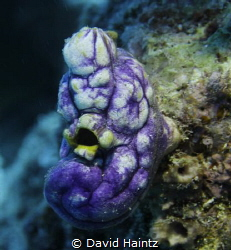 Soht taken out on the Great Barrier Reef, Canon 7D, 17-70... by David Haintz