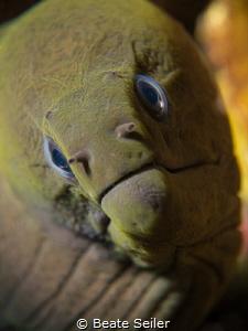 Green Moray Eel by Beate Seiler