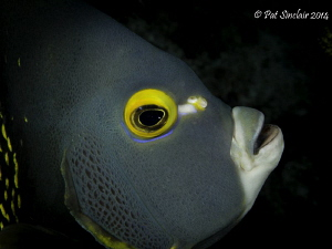 I was trying to get a face shot of a grouper when this Fr... by Patricia Sinclair