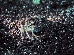 A stargazer (I think), buried in the sand at 6m. Taken wi... by Joe Klakus