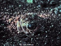 A stargazer (I think), buried in the sand at 6m. Taken wi... by Joe Klakus