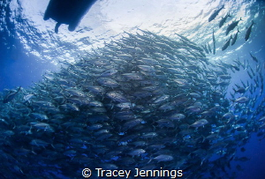 What lies beneath .. by Tracey Jennings