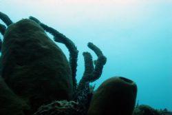 45 ft below the surface. West Palm Beach, FL by Juliana Metzger