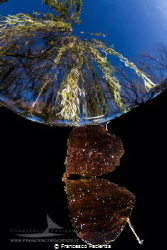 [:b:]The leaf[:/b:] by Francesco Pacienza