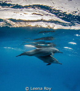 Dolphins at play by Leena Roy