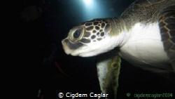 dive buddy by Cigdem Caglar
