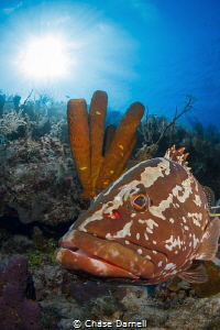 """""""Grouper Face"""" This one just kept getting into an awesom... by Chase Darnell"""