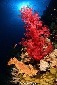 Colors (: by Taner Atilgan