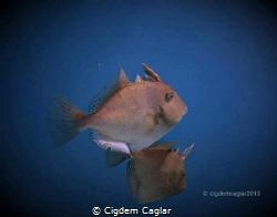 say hi by Cigdem Caglar