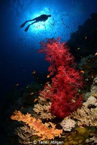 Colors-2 by Taner Atilgan