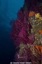 Mediterranean colours by Claudia Weber-Gebert