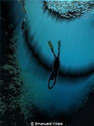 Siren by Emanuele Vitale