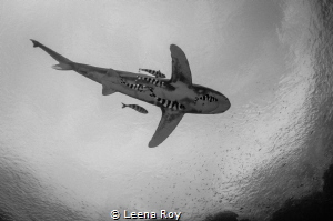 Oceanic shark with entourage by Leena Roy