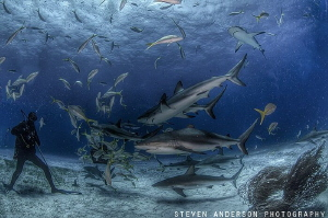 Watching the Sharks go by at Tiger Beach by Steven Anderson