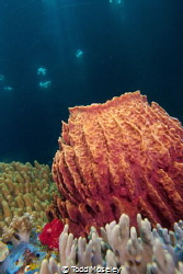 Barrel sponge with cathedral light by Todd Moseley
