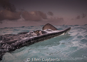 """""""Stormy weather"""" by Ellen Cuylaerts"""