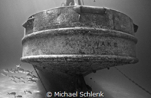 Recent visit to the Kittiwake by Michael Schlenk