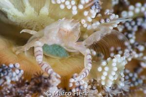 Feeding Mother on Sea Pen by Marco Fierli