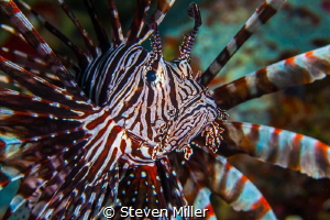 Spiral colors. I remember when I thought you had to go to... by Steven Miller
