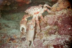 Picture take on the Molassas Reef near Key Largo Florida.... by Chris Rehkopf