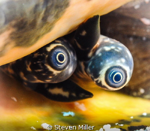 Eyeballs by Steven Miller