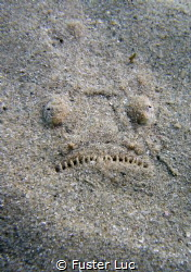 Sandy smile of a stargazer. by Fuster Luc