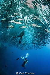 This photo was taken at Sipadan Island marine reserve. Th... by Carl Charter