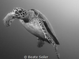 Turtle on the way to the suurface by Beate Seiler