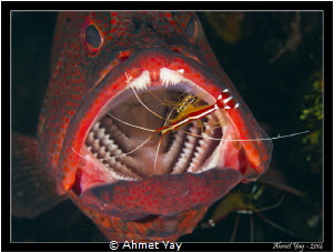 Dentish...:)  Canon 600D-Sea&Sea Housing Canon 60 mm m... by Ahmet Yay