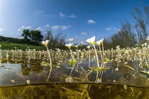 aquatic spring field by Mathieu Foulquié